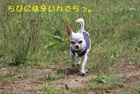 IMG_7527.jpg