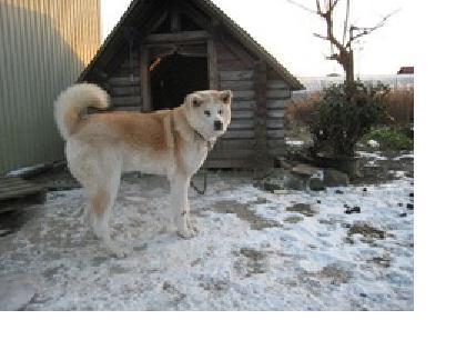 柴犬と小屋