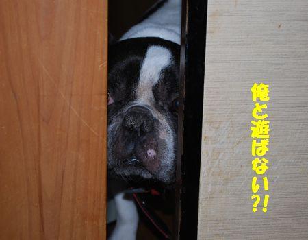 DSC_0049_20110509074533.jpg