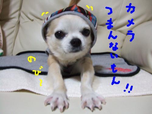 snap_2525tiwaseikatu_20094291215.jpg