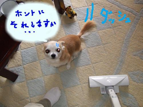snap_2525tiwaseikatu_20094591952.jpg