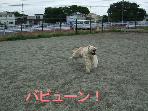 PO20110722_0003.jpg