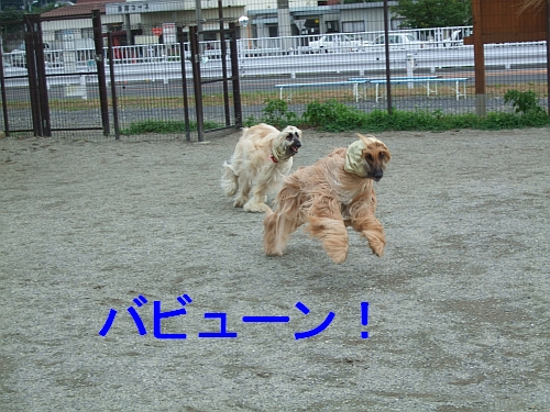PO20110722_0005.jpg