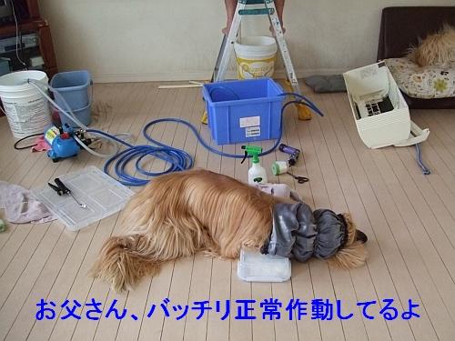 PO20110726_0003_1.jpg