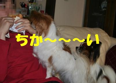 20090525_3771.jpg
