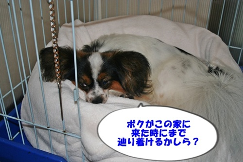 20090706_4949.jpg