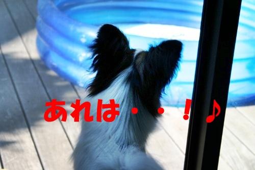 20090716_5077.jpg