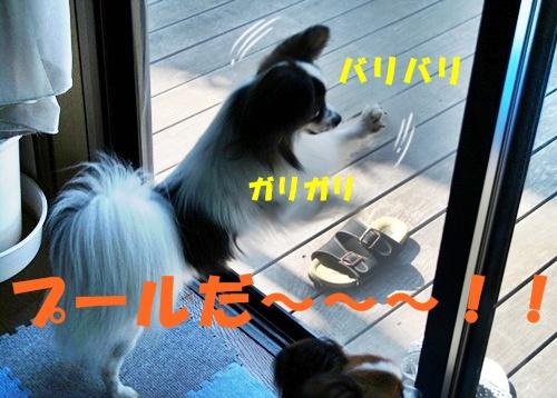 20090716_5078.jpg