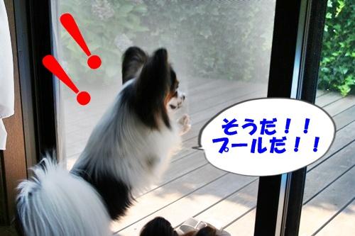 20090716_5080.jpg