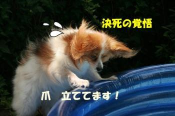 20090727_5234.jpg