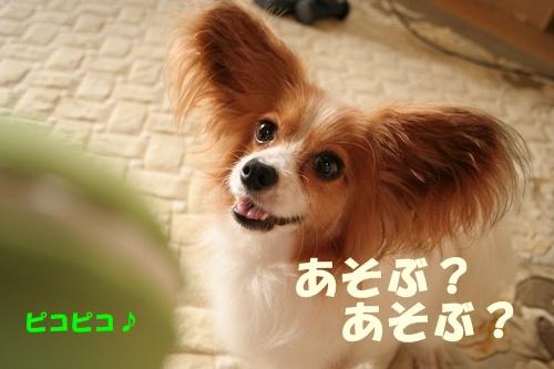 20090730_5340.jpg