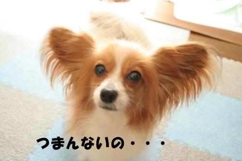 20090816_5495.jpg