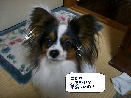 image238813.jpg