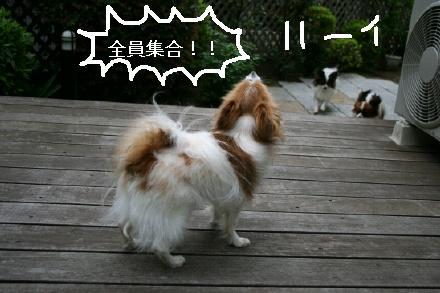 image9734022.jpg