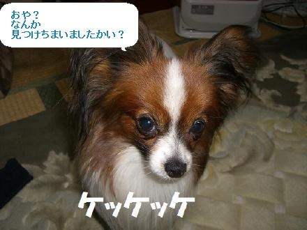image9979129.jpg