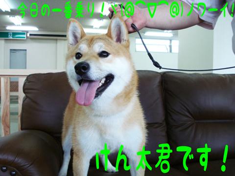 ヤッホー(ノ^∇^)ノ