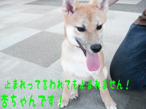 """o( ̄‐ ̄*) ゲンキゲンキ!!"