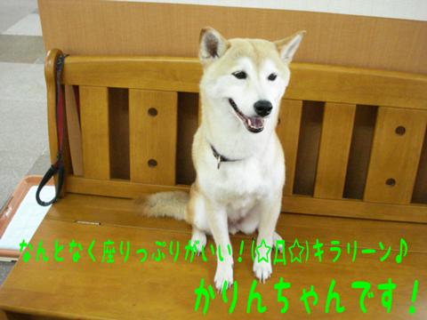 \(\◇ ̄ )ヘン~(  ̄▽/)ゝシン!!! \(○ `O´ ○)/トゥーー!!