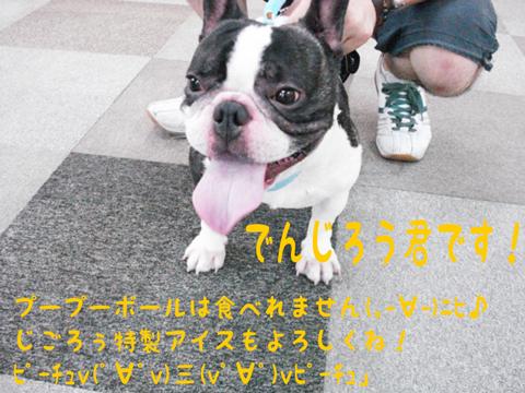 ピーチュv(゚∀゚v)三(v゚∀゚)vピーチュ