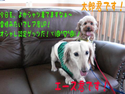 *:.。☆..。.(´∀`人)
