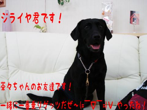 わぁいヽ(゚(エ)゚*ヽ)(ノ*゚(エ)゚)ノわぁい!!