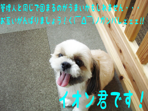 o(*・ω・)ノ ァィ