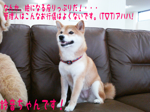 ☆⌒v⌒v⌒ヾ((`・∀・´)ノ ヒャッホーィ♪