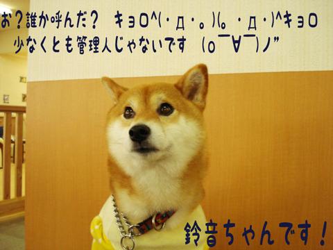 (゚ω゚)ノ ハィ