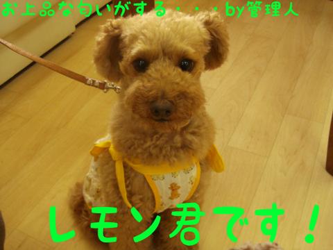 ((_ロ('皿'●)ケシケシ
