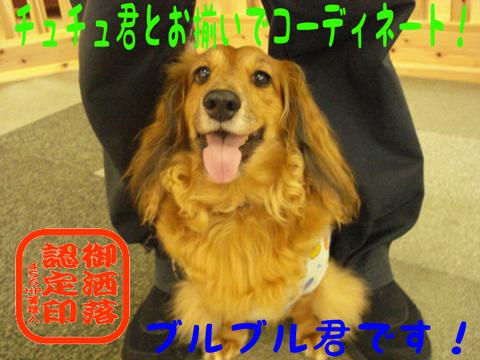 ((φ(VωV $)カキカキ