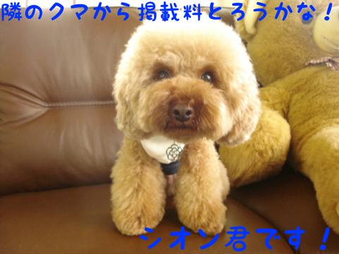 バタン!Юo(^O^ )お邪魔します♪