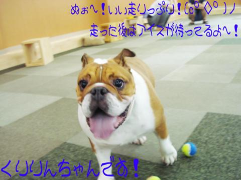 o(*'▽'*)/☆゜'・:*☆ふわぁーい@