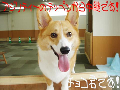 ヽ(^◇^*)/ ワーイ