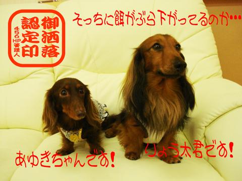 コナイ━━━。゚・(ノД`)人(´Д`)人(Д` )・゚。━━━!!!