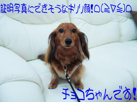 オオオオォ……(ノ゜ο゜)ノミ(ノ _ _)ノコケッ!!