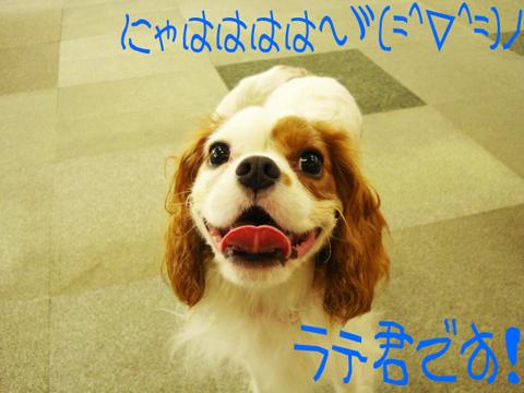 糸色 女子 言周> (   *  ) ´゚,_>゚`)
