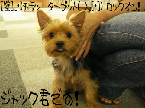 タタタタタ…(((((*。☆:・'ヽ(*・ω・)ノ*:・'゚☆゚・*:ワーイ