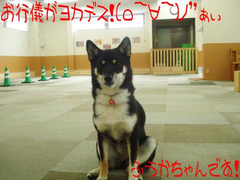 (..)(^^)(^。^)(*^o^)(^O^)ウレシーーー!!