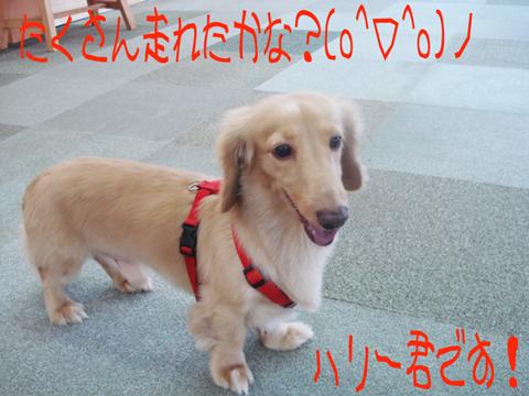 【壁】*-_●-)。o0(かわいい....)