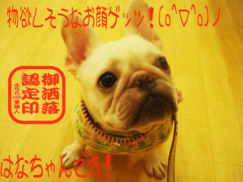 こっち向いてくんろぉ~(・ω・)ノ