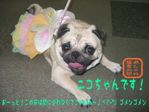 [壁]○´_ω`)ツ))   コッチコッチ♪