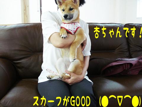 うふふっ(*゜v゜*)