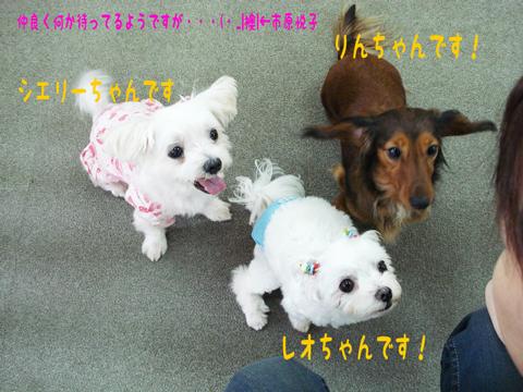 りんちゃん&レオちゃん&シエリーちゃん!