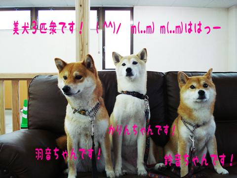 闘魂3姉妹!・・・もとい!美犬3姉妹!