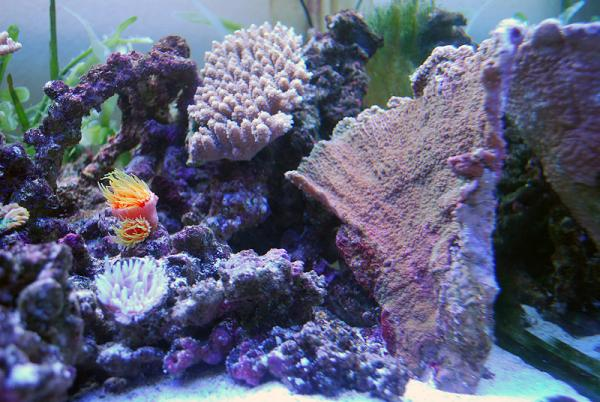 サンゴたち01