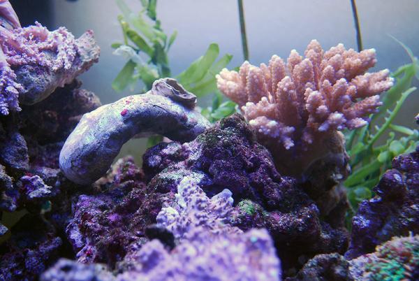 サンゴたち02