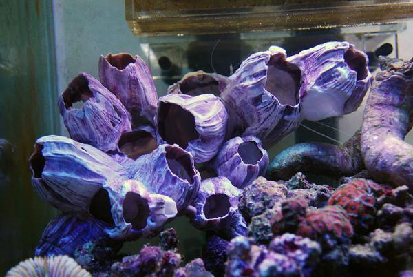 フジツボの殻