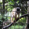 アフリカンサファリ+013_convert_20090831211007
