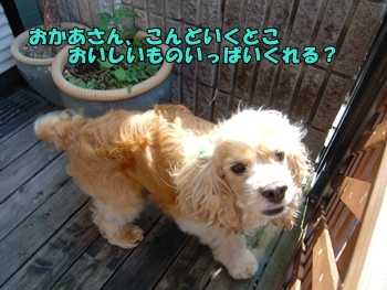 モップ旅たちDSCN0831