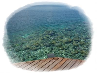 リアル珊瑚2
